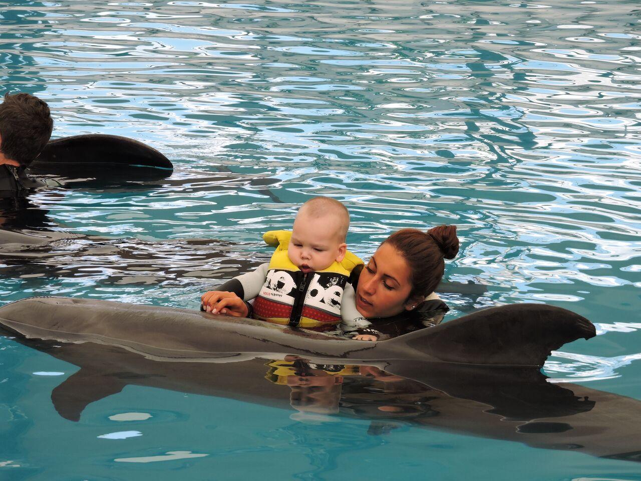 Terapia cu delfini